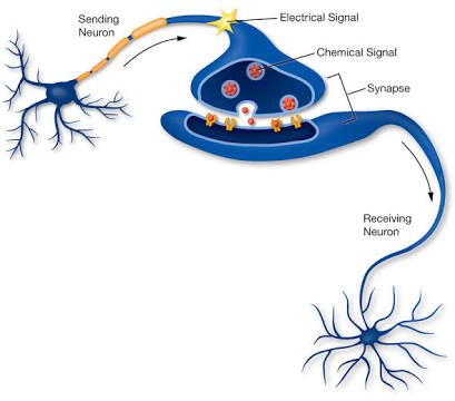 neuron_signalling_utah